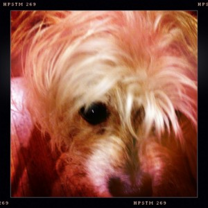 Hideous Terrier in all his glory.